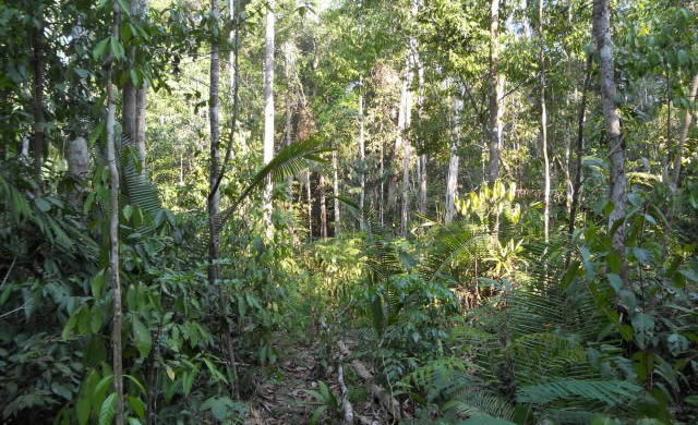 Jacundá Forest Reserve